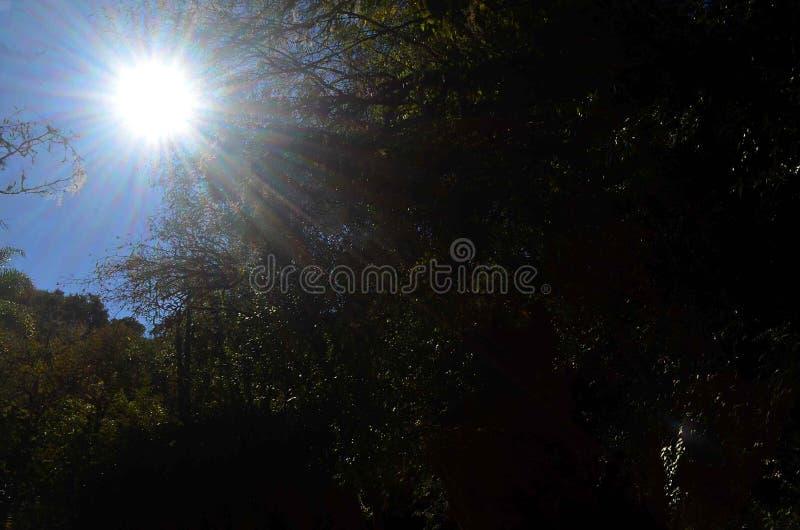 Raggi di sole in mezzo degli alberi fotografia stock libera da diritti
