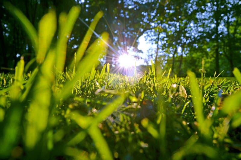 Raggi di sole nell'erba fresca di estate fotografia stock