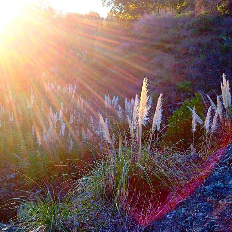 Raggi di Sun fotografie stock