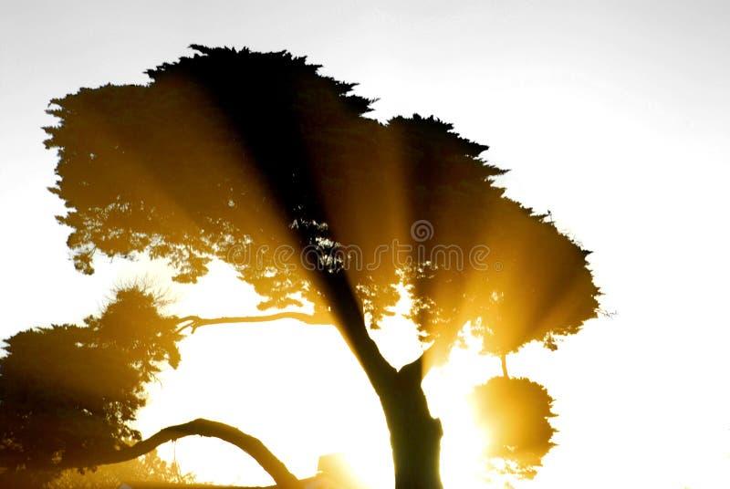 Raggi di Sun che irradiano con un Tre fotografie stock libere da diritti