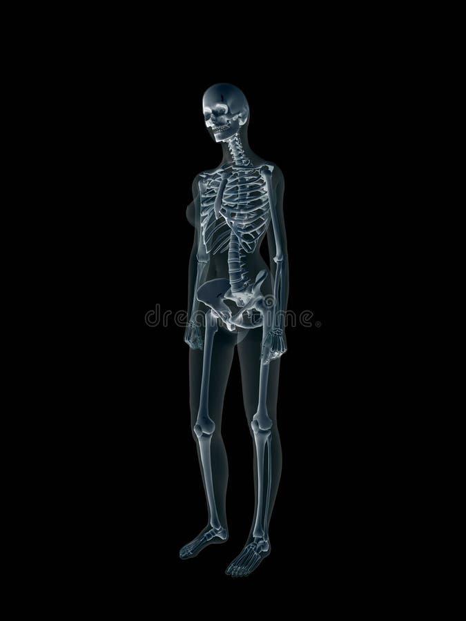 Raggi X, raggi X del corpo femminile umano. illustrazione di stock