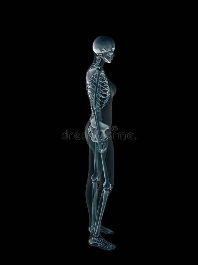Raggi X, raggi X del corpo femminile umano. illustrazione vettoriale