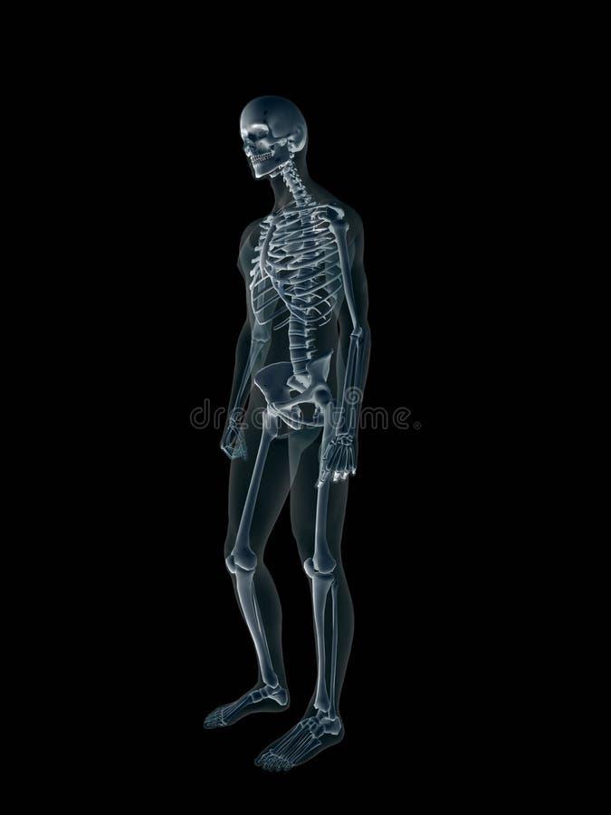 Raggi X, raggi X del corpo maschio umano. illustrazione vettoriale