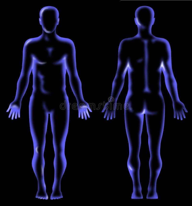 Raggi X umani di anatomia illustrazione di stock