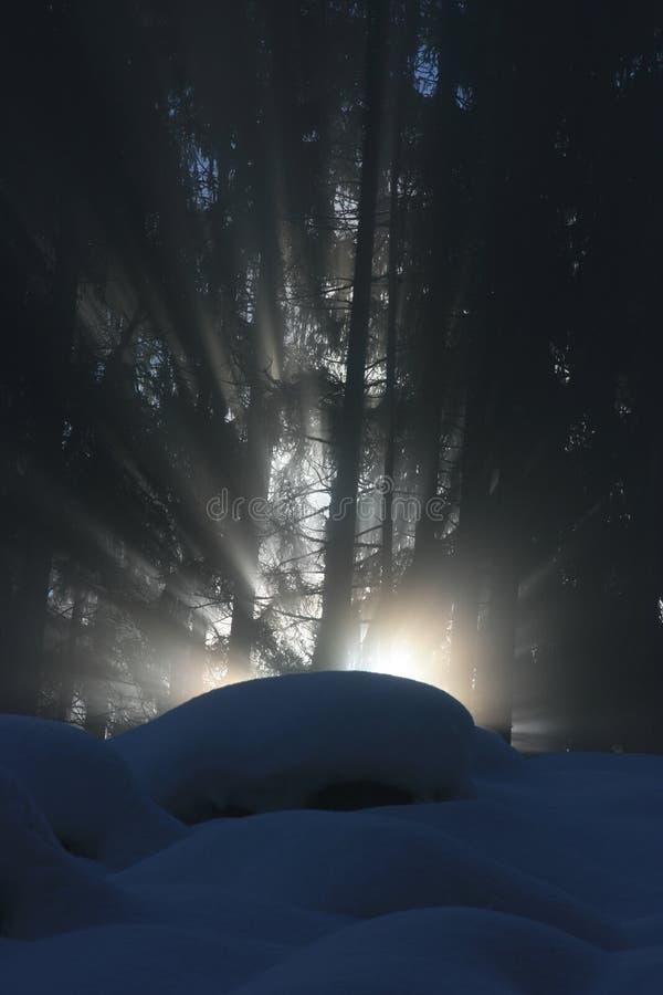 Raggio di luce solare con più forrest fotografia stock libera da diritti