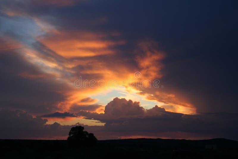 Download Raggio luminoso immagine stock. Immagine di luce, albero - 207407