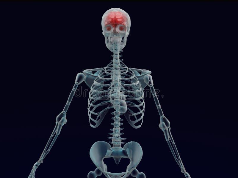Raggio rosso umano del cervello X nel fondo nero illustrazione di stock