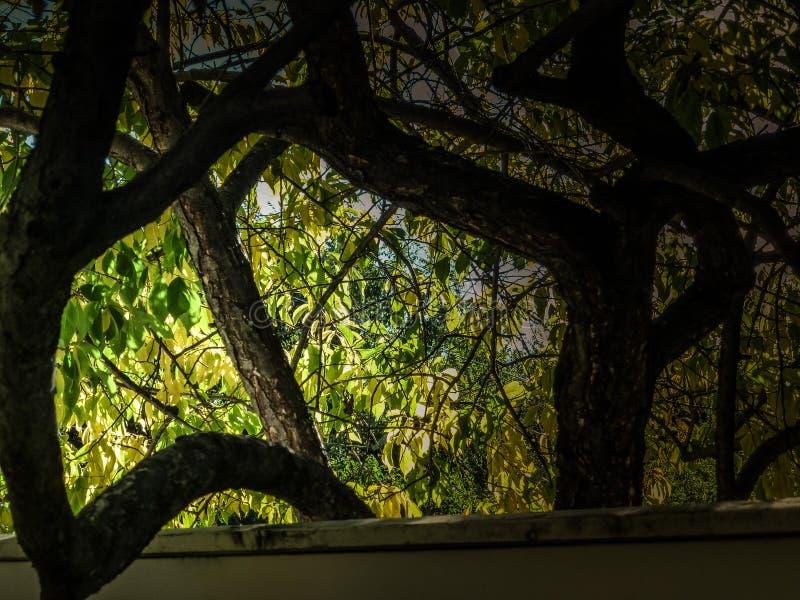 Raggiungimento dell'albero fotografia stock
