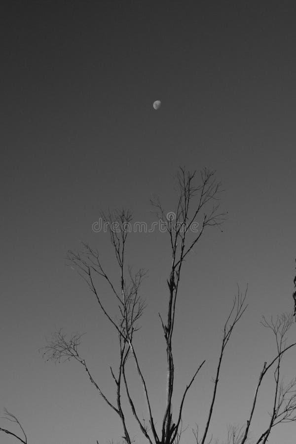 Raggiungimento della luna fotografia stock