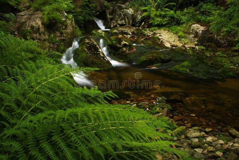 Raggruppamento del flusso in montagne giganti fotografia stock