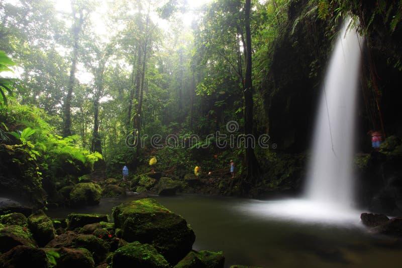 Raggruppamento verde smeraldo, Dominica immagini stock