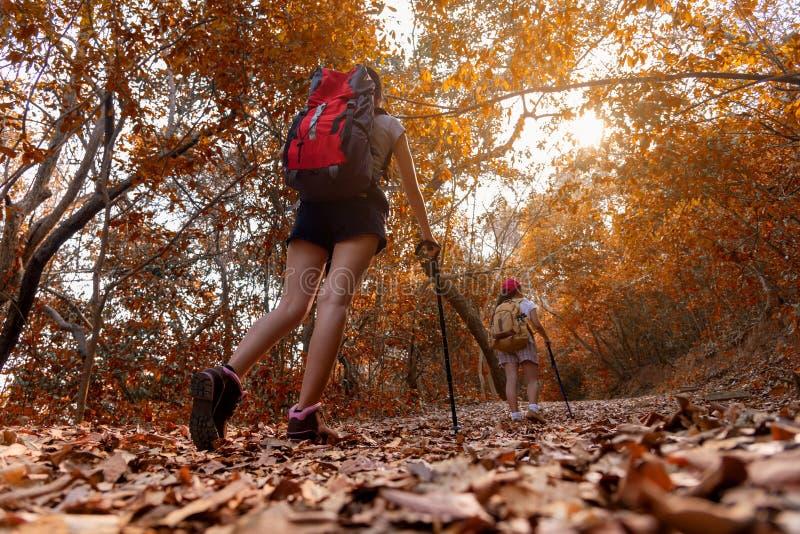 Raggruppi le giovani donne delle viandanti che camminano con lo zaino su una montagna al tramonto Viaggiatore che va in campeggio immagine stock