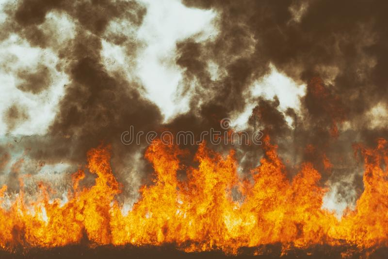 The raging flame of fire burn in the fields, forests and black thick acrid smoke. Big wildfire close-up. The raging flame of fire burn in the fields, forests and stock image