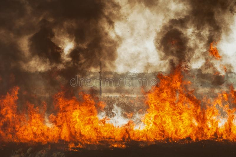 The raging flame of fire burn in the fields, forests and black thick acrid smoke. Big wildfire close-up. The raging flame of fire burn in the fields, forests and royalty free stock photos
