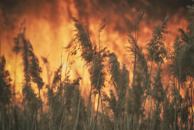 The raging flame of fire burn in the fields, forests and black thick acrid smoke. Big wildfire close-up. The raging flame of fire burn in the fields, forests and royalty free stock photo