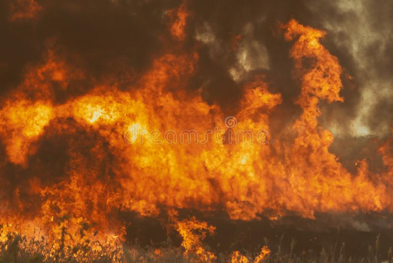 The raging flame of fire burn in the fields, forests and black thick acrid smoke. Big wildfire close-up. The raging flame of fire burn in the fields, forests and royalty free stock photography