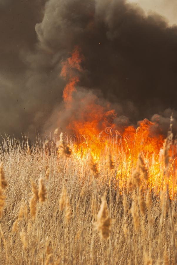 The raging flame of fire burn in the fields, forests and black thick acrid smoke. Big wildfire close-up. The raging flame of fire burn in the fields, forests and stock images