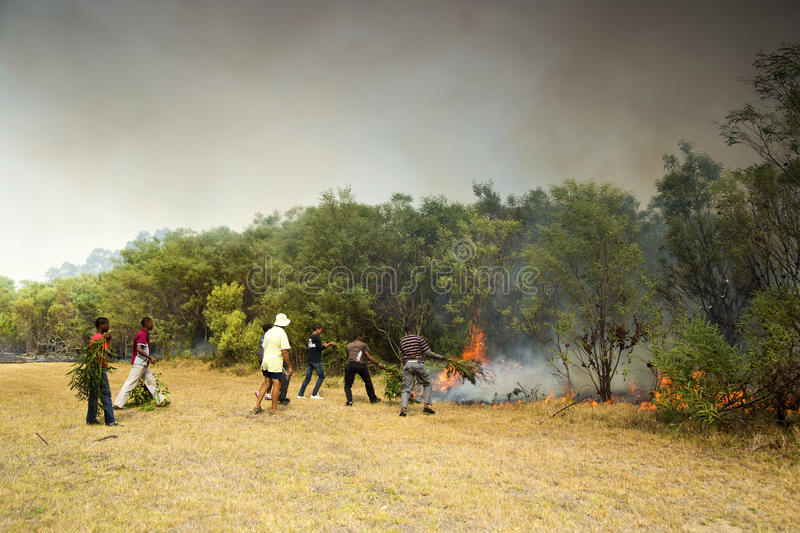 Raging wildfire in Port Elizabeth, South Africa. Adults and children keeping a wildfire under control that is raging near a home for destitute adults and a stock photos