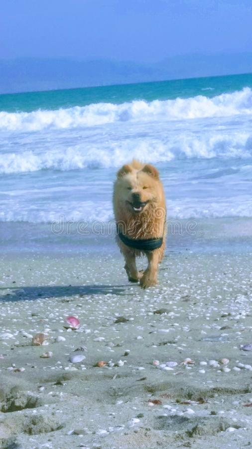Ragnar sur la plage photos stock