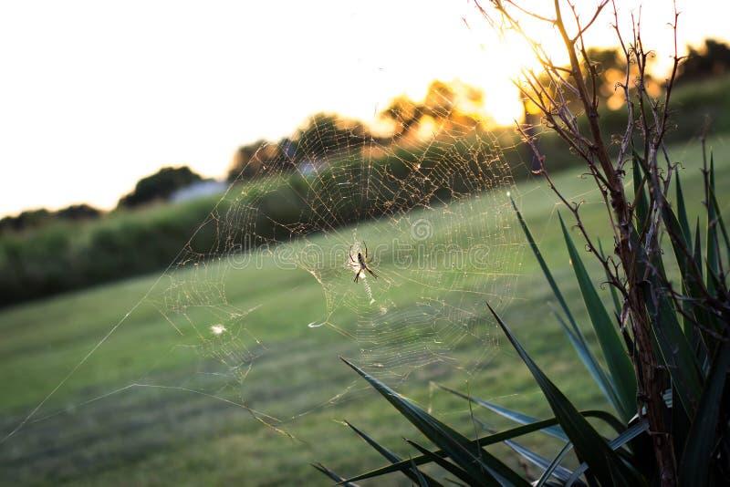 Ragnatela al tramonto fotografie stock