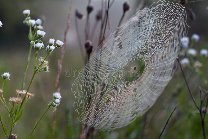 Ragnatela e ragno fotografie stock libere da diritti