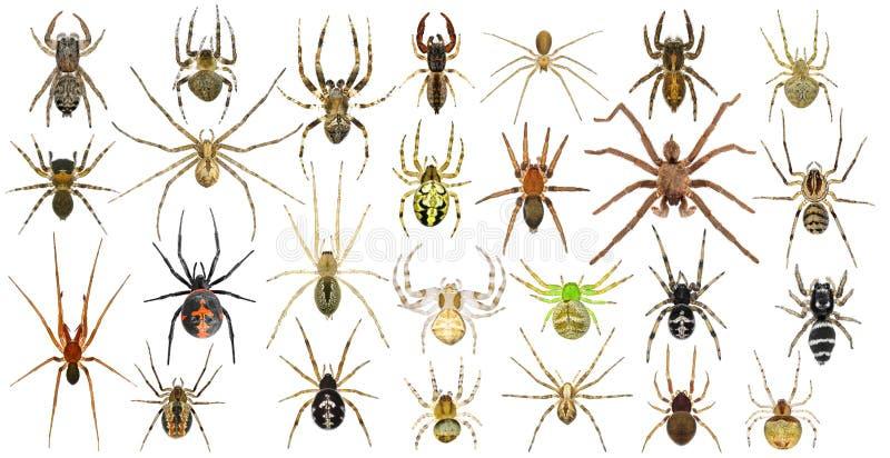 ragni immagini stock libere da diritti