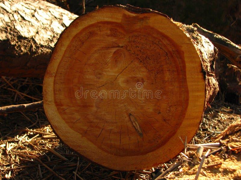 Ragni di legno immagini stock libere da diritti