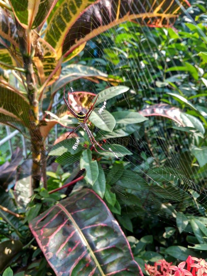 Ragno in albero fotografia stock