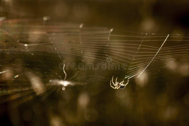 Ragno che lavora al web fotografia stock