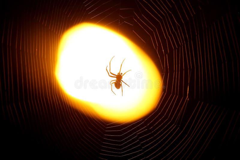 Ragno che si siede su un web alla notte nell'ambito della luce di una lanterna fotografie stock libere da diritti