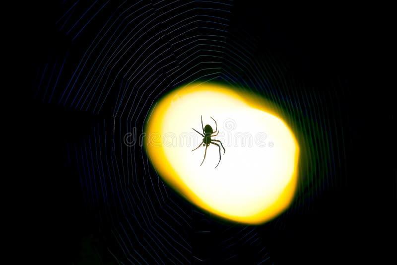 Ragno che si siede su un web alla notte nell'ambito della luce di una lanterna immagine stock libera da diritti