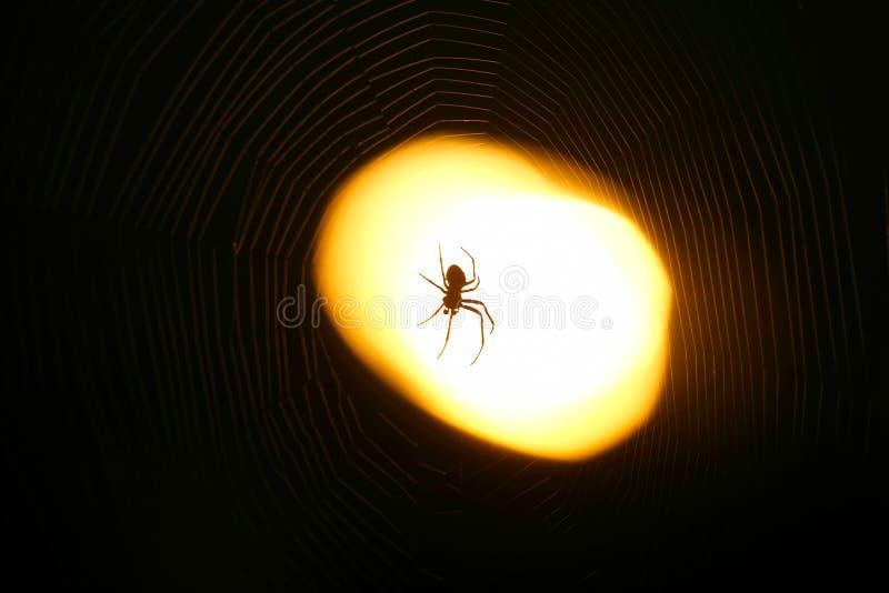 Ragno che si siede su un web alla notte nell'ambito della luce di una lanterna fotografia stock libera da diritti