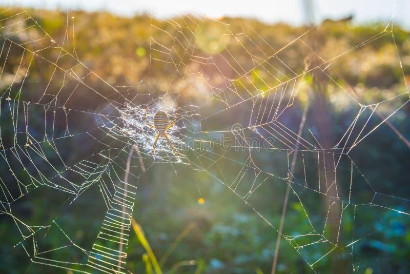 Ragno di giardino spogliato fotografia stock libera da diritti