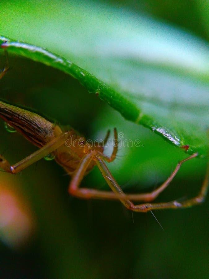 Ragno di macro della foto fotografia stock