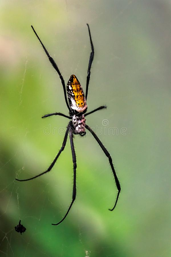 Ragno dorato del globo fotografia stock