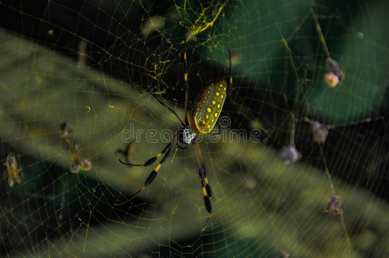 Ragno dorato del globo immagini stock libere da diritti