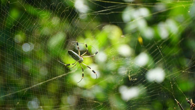 Ragno e ragnatela giganti fotografia stock