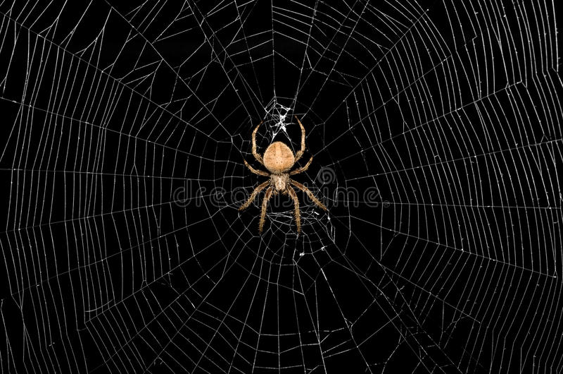 Ragno e Web fotografie stock libere da diritti