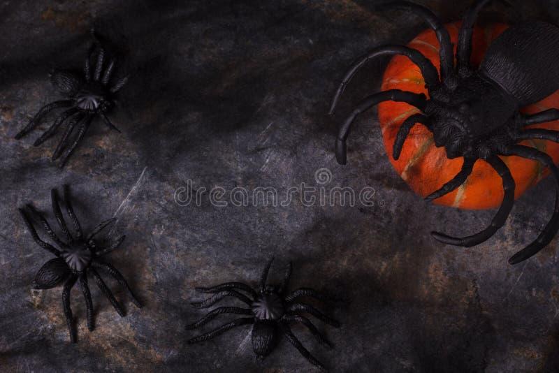 Ragno e zucca sul web con lo spazio della copia per Halloween immagine stock
