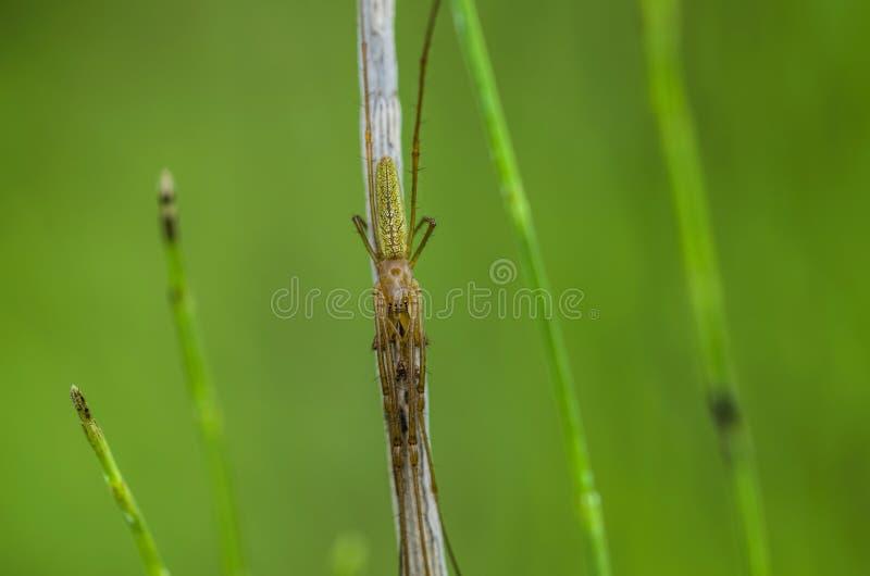 Ragno marrone nascosto fotografie stock libere da diritti