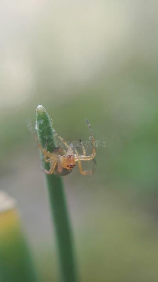 Ragno molto piccolo fotografia stock