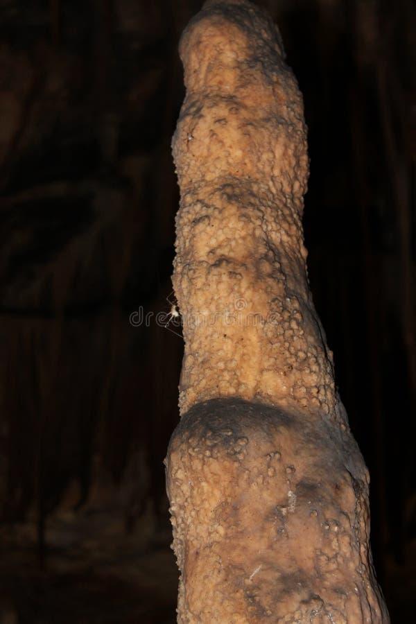 Ragno nella caverna, attaccata alla stalattite fotografia stock libera da diritti