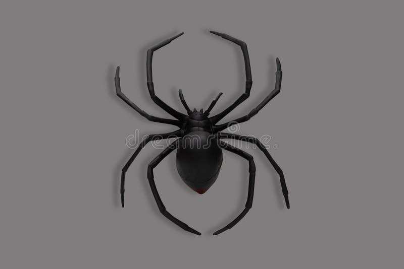 Ragno nero su fondo grigio fotografia stock
