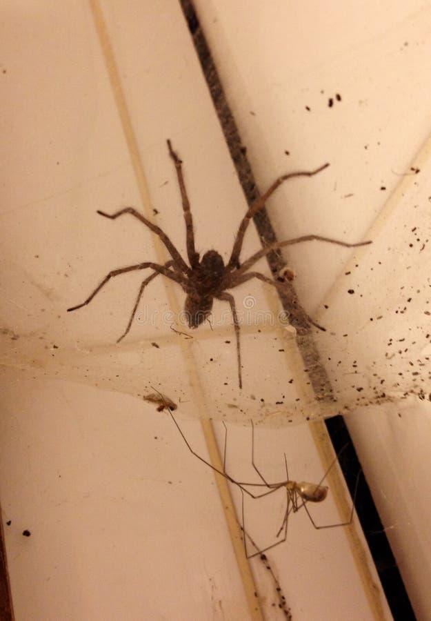 Ragno sopra il ragno immagini stock