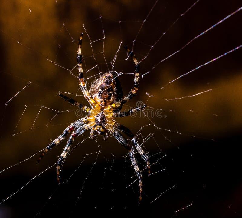Ragno su un Web fotografia stock