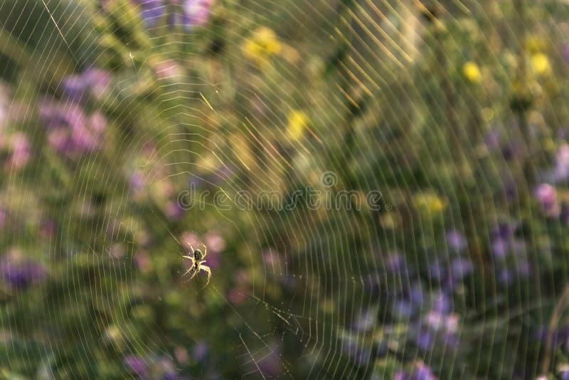Ragno su un Web di ragno immagini stock libere da diritti
