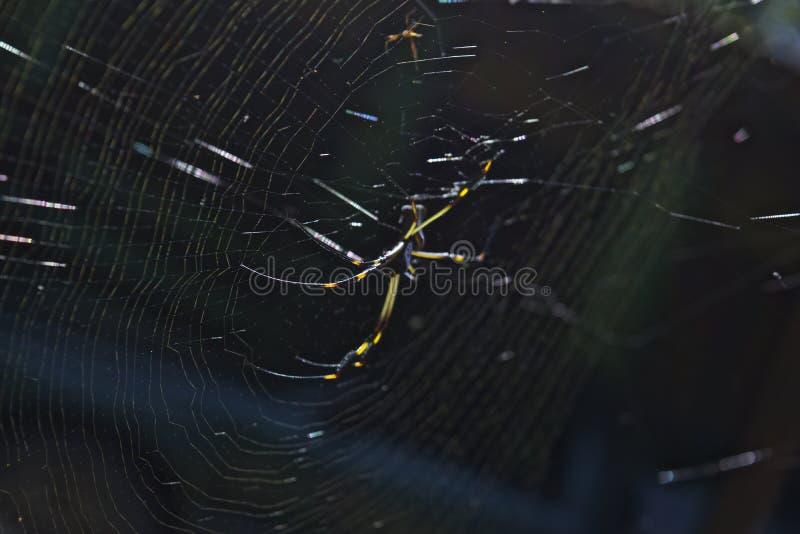 Ragno sul suo Web immagine stock