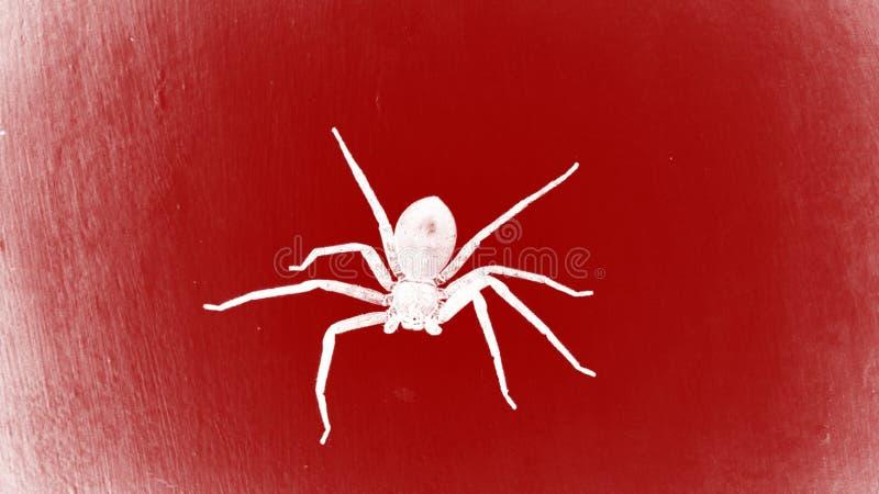 Ragno sulla parete rossa fotografie stock
