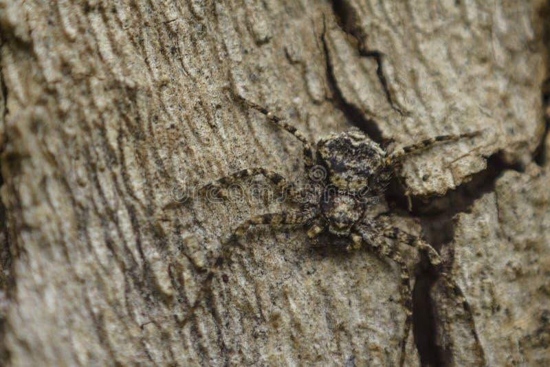 Ragno timido su un albero fotografia stock