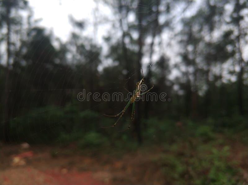 Ragno verde di struttura immagini stock
